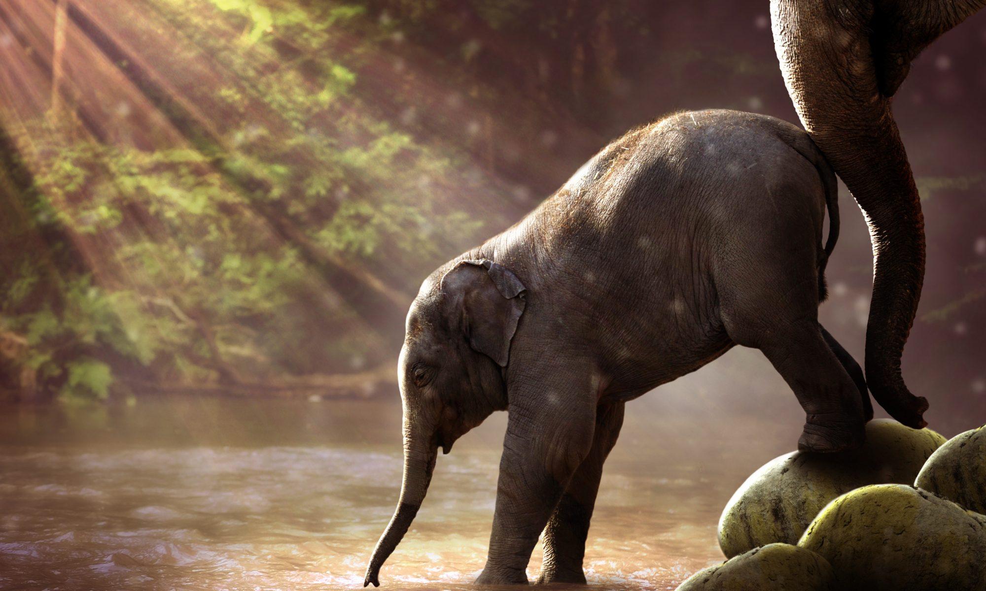 Baby Elefant an Wasserstelle